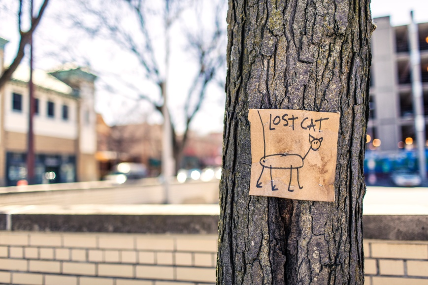 lost cat stick sign